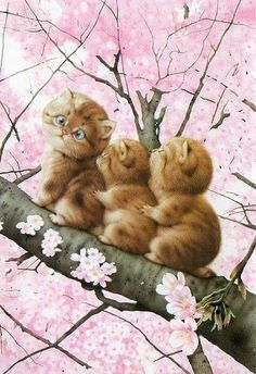 Imagen de flowers, cat, and tree
