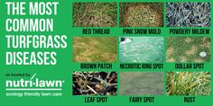 Does your lawn look like any of these images?