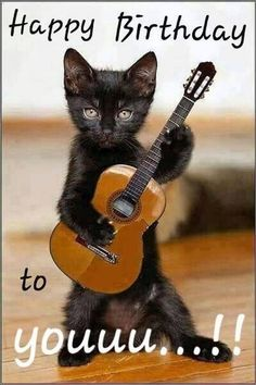 Funny Animal Quotes, Funny Animal Pictures, Cute Funny Animals, Funny Cute, Cute Cats, Animal Humor, Animal Pics, Funny Cat Photos, Crazy Cat Lady