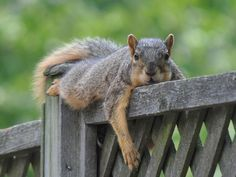 Don't you feel like this some afternoons? For a matching silver charm visit http://www.ninadesigns.com/bali_bead_shop/sterling_silver_squirrel_charm/a744/details