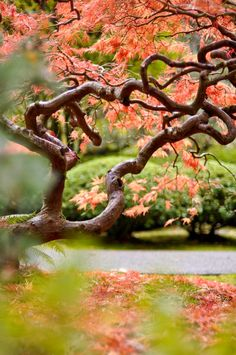 Is it the brown & coral combo w/ green, or the gnarled branches that I love about this?