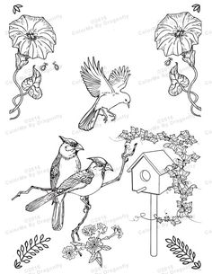 Image result for bird house coloring pages RISCO PARA PINTAR E