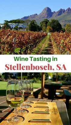 Stellenbosch is South Africa's top travel destination for food wine and adventure which can all be had at bargain prices! Travel in Africa. Top Travel Destinations, Best Places To Travel, Luxury Travel, Travel Usa, Africa Travel, Travel Around The World, South Africa, Travel Inspiration, Adventure