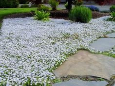 Tired of maintaining a grassy lawn? Prepare for spring and find inspiration to start replacing parts of your lawn with groundcovers.