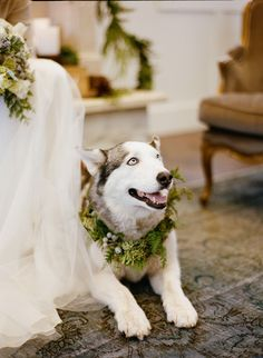 Husky Winter Wedding | photography by http://jacquelynnphoto.com/