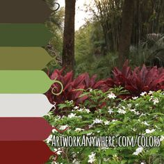 color-palette-deep-forest-green-red