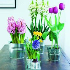 Brabourne Farm: Love .... Potted Spring Bulbs