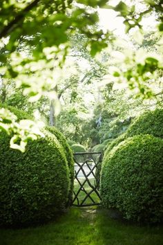 images about Garden on Pinterest Hedges Buxus and