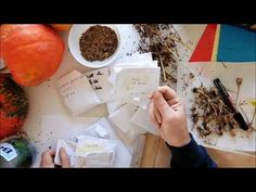 Salvez seminte de la legume pentru sezonul urmator /Saving Vegetable Seeds For Next Season - YouTube Salvia, Breakfast, Youtube, Food, Plant, Sage, Hoods, Meals, Youtubers