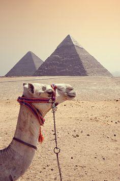 Must-Do Travel Experiences: Camel Trekking in Egypt