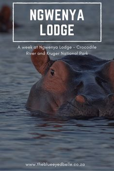Ngwenya Lodge- Kruger National Park - South Africa - Wildlife - Hippos