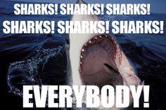 """""""Oh, is it shark week?  I hadn't heard."""" said nobody, ever."""