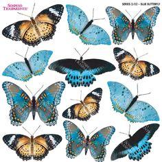 Sospeso transparente prediseñado Blue Butterfly 23x23 cm