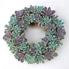 echeveria wreath