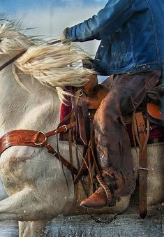 Cowboy Blues Photograph by Judy Neill - Cowboy Blues Fine Art Prints and Posters for Sale Cowboy Girl, Cowboy Horse, Cowboy And Cowgirl, Pretty Horses, Horse Love, Beautiful Horses, Western Riding, Western Art, Westerns