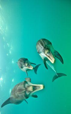 Laughing dolphins byAtmo Kubesa