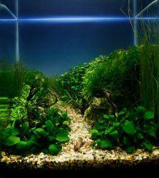 small planted aquascape