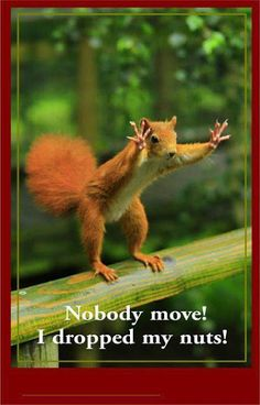 Nobody move! I dropped my brain! ~Pirates of the Carribean~