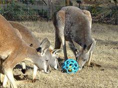 Zoo Atlanta Wish List - the animals always need enrichment!