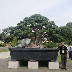 Bonsai styles are different ways of training your bonsai to grow the way you want it to. Get acquainted with these styles which are the basis of bonsai art. Large Bonsai Tree, Bonsai Tree Care, Bonsai Tree Types, Bonsai Plants, Bonsai Garden, Japanese Bonsai Tree, Bonsai Forest, Bonsai Styles, Asian Garden