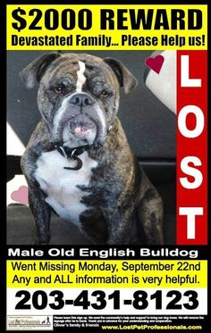 RIP 10/3/14 Oliver is Missing in Ridgefield near the High School/Spring Valley Rd area. Call with sightings or any information. Please share https://m.facebook.com/groups/704382322969191?ref=m_notif&notif_t=group_r2j_approved