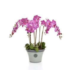 Castleton Home Orchids Floral Arrangements in Pot | Wayfair.co.uk