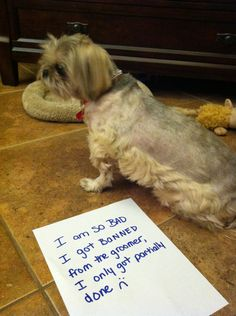 """I am so bad I got banned from the groomer, I only got partially done! :("" ~ Dog Shaming shame - LOL..."