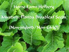 Mustard, Florida Broadleaf Seeds, Ord..., Home - outdoor in Hart County
