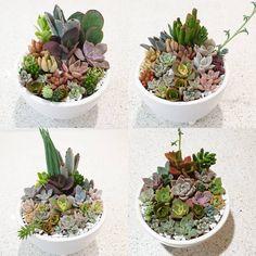 Succulents Garden, Plants, Instagram, Planters, Plant, Planting