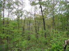 396 acres m/l of marketable timber, excellent hunting, beautiful building sites, close to National Forest and Ft. Wood. About 2 hours from St. Louis. This property will need an easement in Bucyrus MO