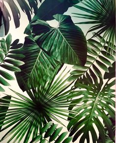 tropical print, plants pattern, tropical pattern, palms decorating