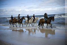Mistrzostwa Nordic Walking Łeba 2012 - towarzyszyły nam konie