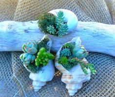 Bomboniere di matrimonio con piante grasse Pagina 11 - Fotogallery Donnaclick