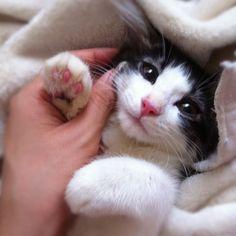 うちの仔猫、可愛くなりすぎる病気にかかっちゃったみたいなんだけど どこで治療したらいいですか? #スパイス兄弟 #cat - @miu_sakamoto- #webstagram