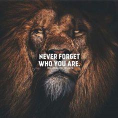 677 motivational and inspirational quotes - success quotes - . - 677 motivational and inspirational quotes – Success Quotes – # - Inspirational Quotes About Success, Quotes About Moving On, Success Quotes, Positive Quotes, Quotes About Lions, Motivational Quotes Change, Badass Quotes, Best Quotes, Citation Lion