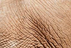 Elephant Skin Close-up