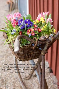 Old rusty bike with Spring flower basket Bright Flowers, Spring Flowers, Beautiful Flowers, Old Bicycle, Bicycle Decor, Spring Has Sprung, Yard Art, Garden Inspiration, Container Gardening