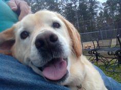 sweetest loving dog ever...cody