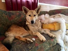 Omg it just you know... POOF!   http://ift.tt/2biMG3n via /r/dogpictures http://ift.tt/2biHX1K  #lovabledogsaroundtheworld