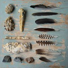 Collage of collected nature finds - Feathers, sticks, skull, rocks, shells