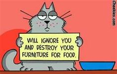 Just like my cat, after he eat more and than other cats.