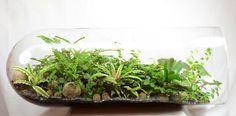 bonsai moosbaum terrarium selber machen youtube. Black Bedroom Furniture Sets. Home Design Ideas