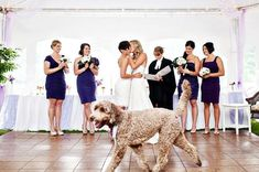 50 Funny Wedding Photo