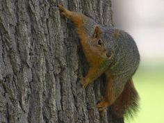 (fox)Squirls, have to have some wildlife around the yard