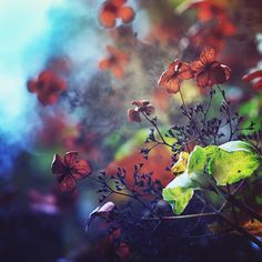 Impressionism in the Garden of Good and Evil by Nikita Gill #photography #flower