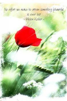 No effort we make to obtain something beautiful is ever lost. -Helen Keller