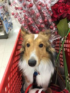 Harpo goes Christmas shopping.
