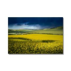 If you cross the South Downs in West Sussex, England towards the sea you are rewarded with a feast of springtime yellow fields. Buy Prints, Framed Prints, Fine Art Photography, Nature Photography, Canvas Frame, Canvas Art, Traditional Picture Frames, Yellow Fields, Wooden Picture Frames