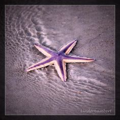 If you come across these stranded pretty creatures please gently put them back into the water! #starfish #florida #fish #staugustinebuzz #staugustine by hawktotem