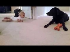 Baby's First Crawl Is Supervised by The Family Dog. What An Adorable Ending!
